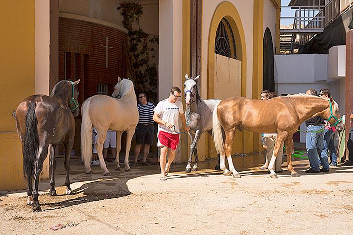 Una estampa preciosa de los caballos antes y después de la ducha